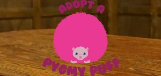 a cartoon picture of a pink pygmy puff on a table with the words adopt a pygmy puff in pink text