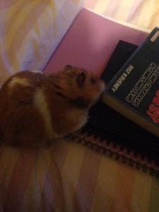 Lizzie's hamster Crookshanks