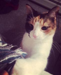 Kat's cat Narcissa
