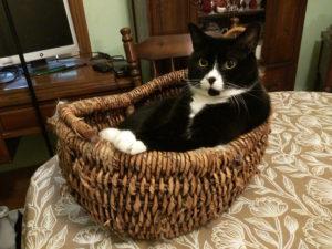 Jessica's cat Sirius