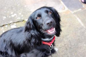 Charlotte's dog Molly