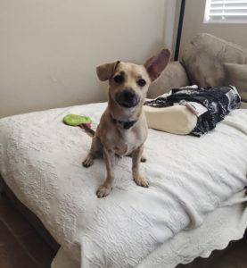 Savannah's dog Nimbus