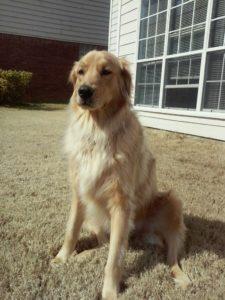 Stephen's dog Finn