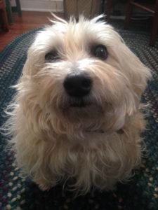 Amy's dog Dobby
