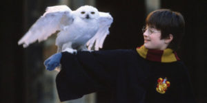 Harry holding Hedwig