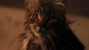 mrs norris filch's cat
