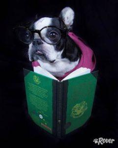 harry potter dog rover.com