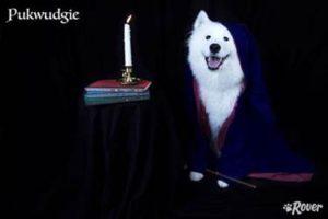 pukwudgie dog rover.com
