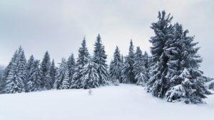 the-forest-around-ilvermorny