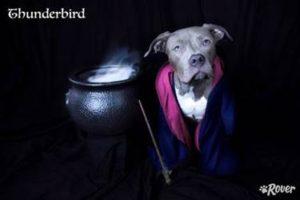 thunderbird dog rover.com
