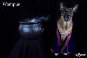 wampus dog rover.com
