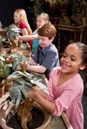 Chicago Exhibition Mandrake Pulling