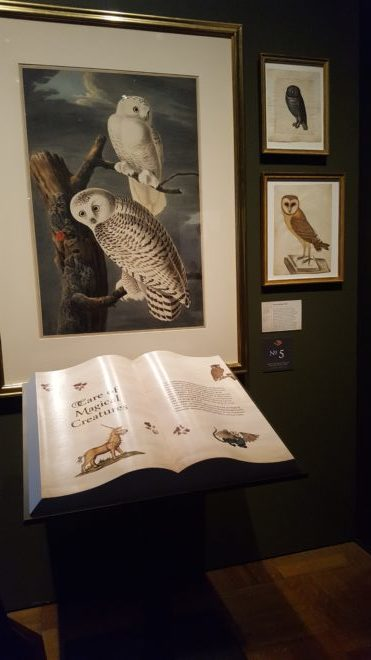 Main exhibit in the Care of Magical Creatures room depicting snowy owls
