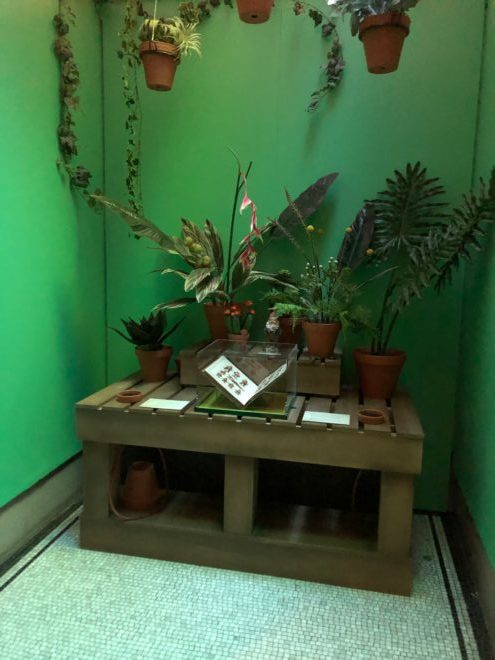 A collection of plants in the Herbology room
