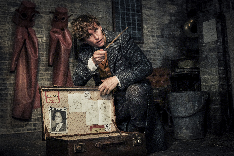 Newt Scamander kneels at an open case.