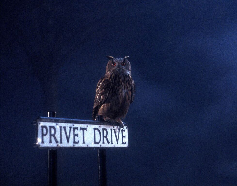 An owl perches on the Privet Drive sign.