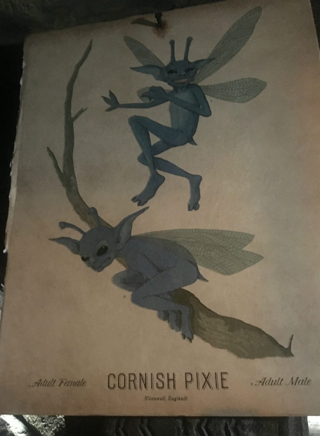 This illustration features an adult male and female Cornish pixie.