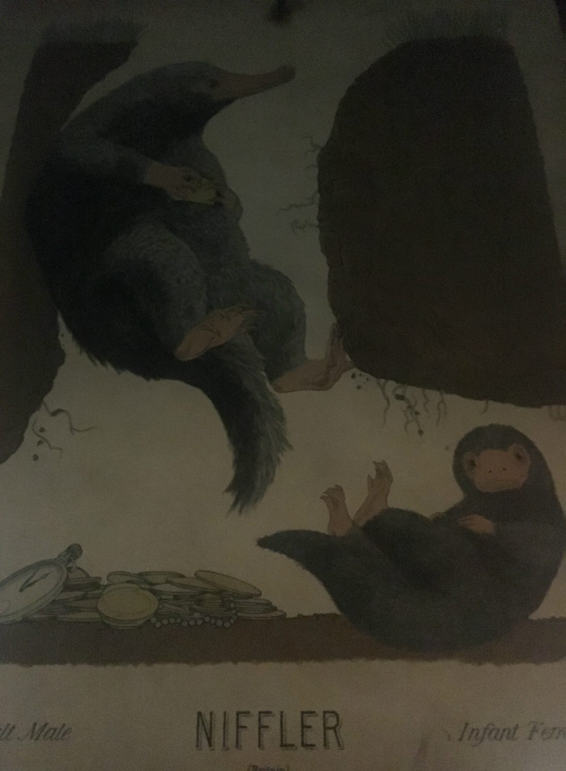 This illustration features an adult male and infant female Niffler.