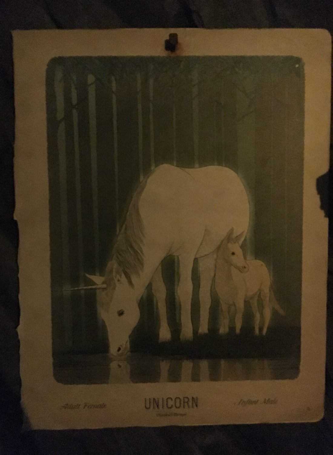 This illustration features an adult female and infant male unicorn.