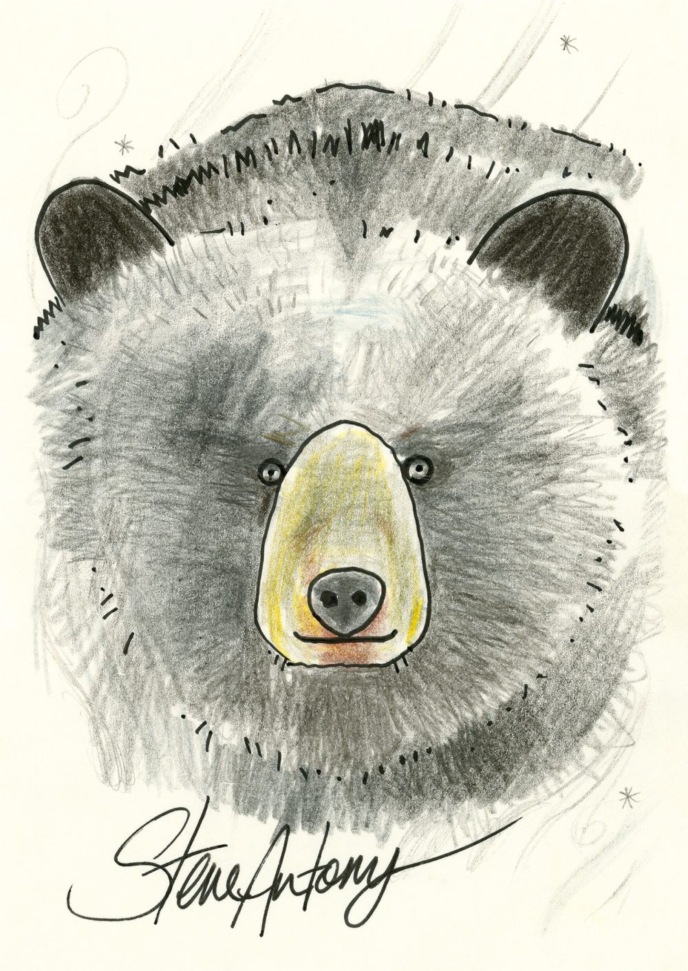 Black Bear – Steve Antony