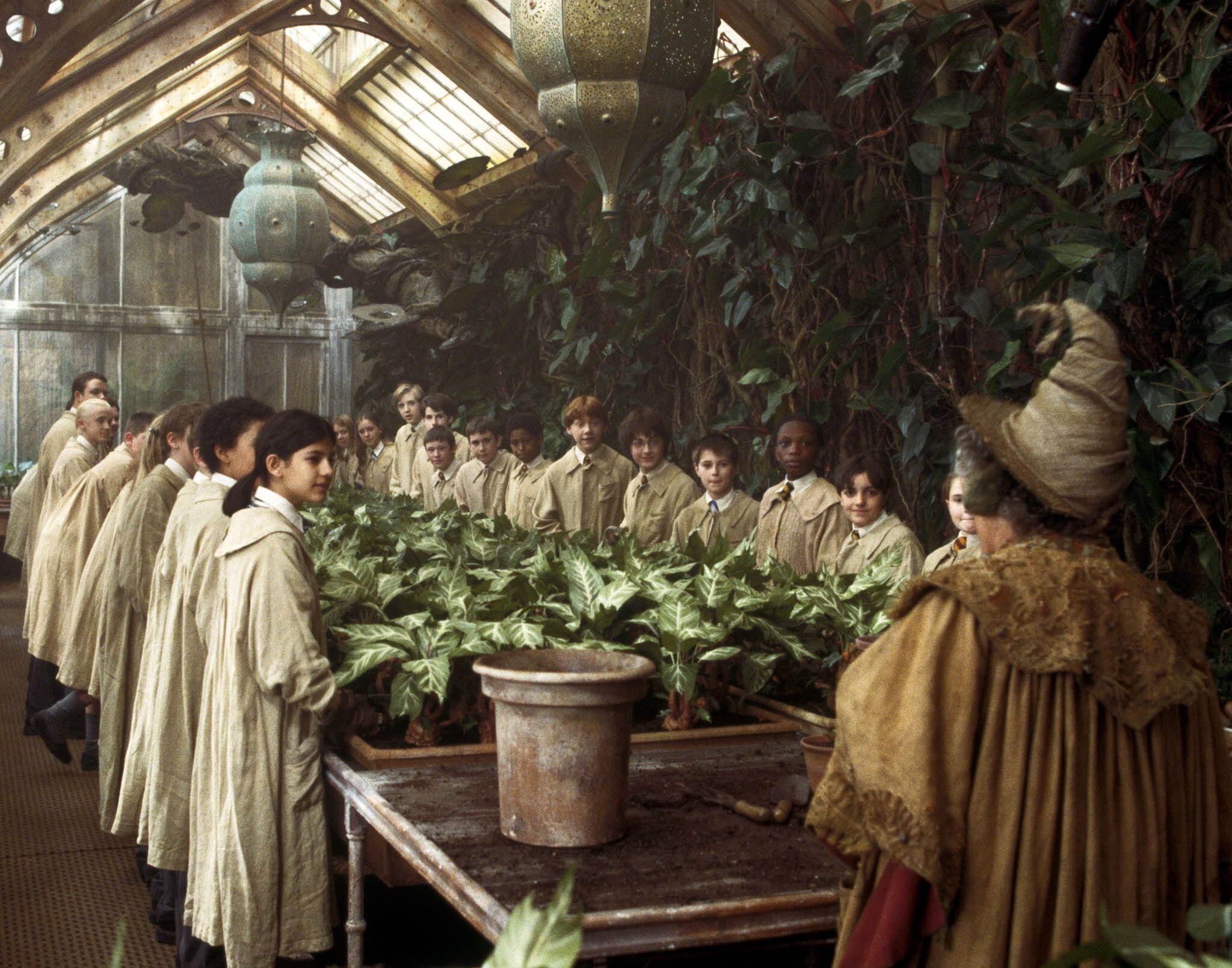 Repotting Mandrakes