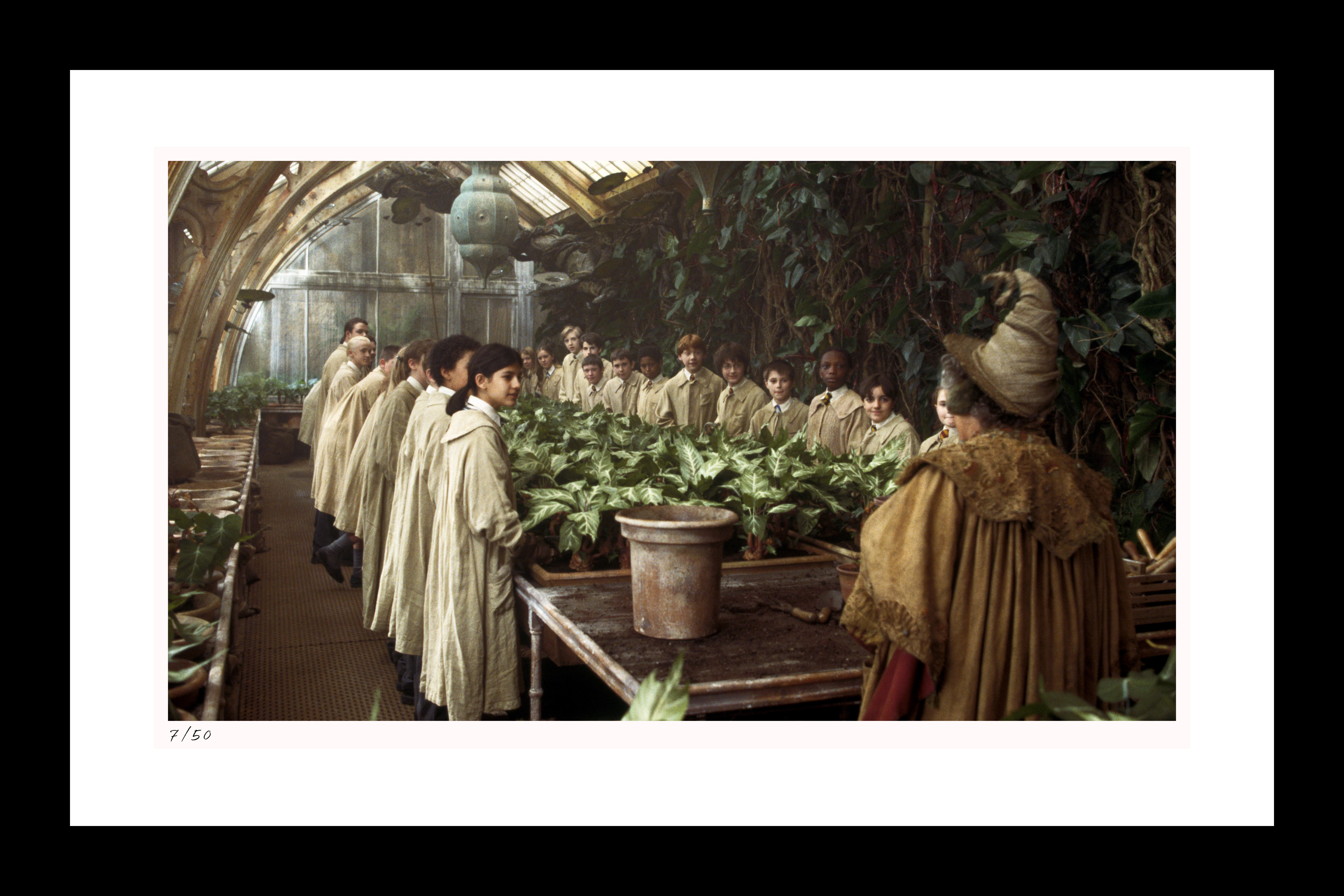 "Classic Stills ""Re-Potting Mandrakes"""