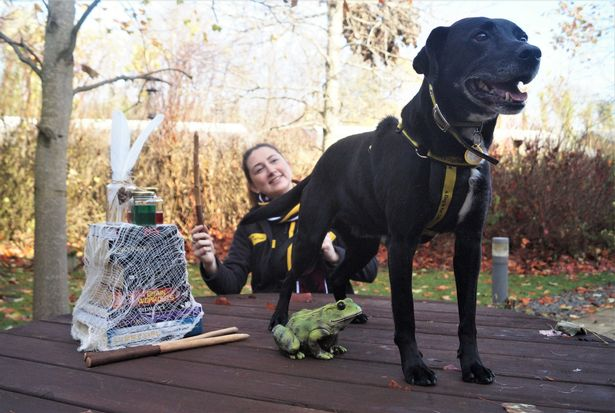 Harry Potter Pup Pictured with His Special Friend, Megan Reilly.