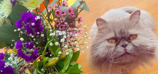 Evanna Lynch's cat, Puff, stares at the camera next to some flowers.