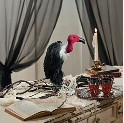 Augusta vulture