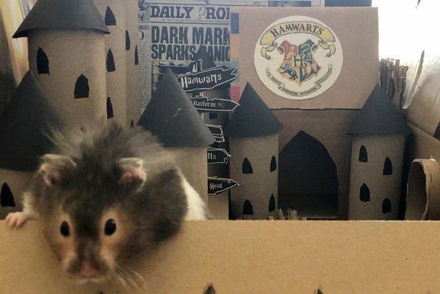 Spud the Hamster at Hamwarts