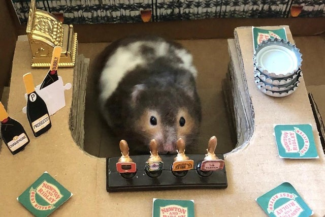 Spud the hamster at his personal bar