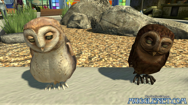 Pottermore playstation owls