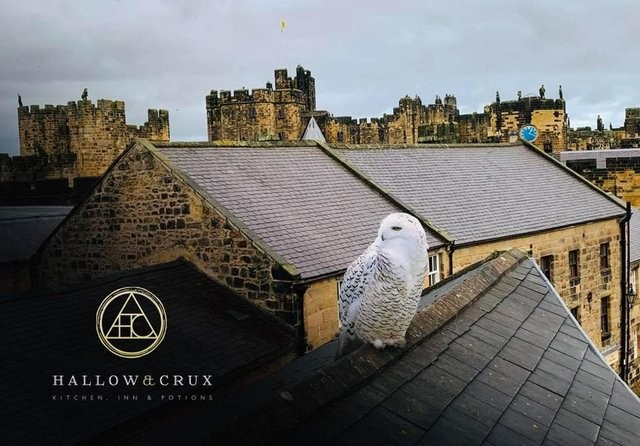 A rooftop view of Alnwick can be seen with Alnwick Castle in the background not terribly far in the distance. There is a snowy owl perched on a nearby rooftop.