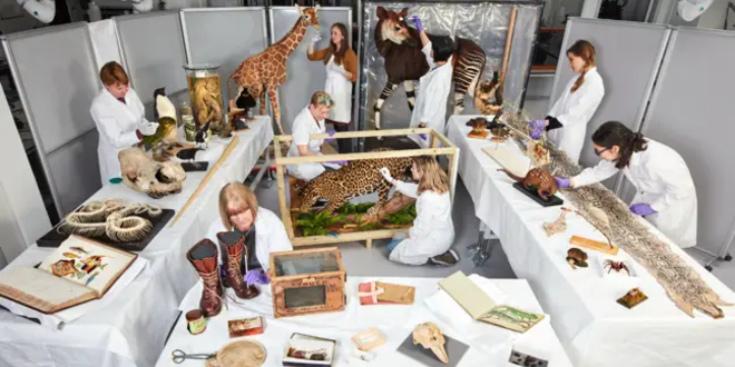 Staff at the Natural History Museum, London, preparing the exhibits