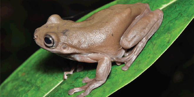 The real-life Chocolate Frog